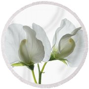 Two White Sweet Peas Round Beach Towel