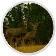 Two Young Bucks Round Beach Towel