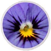 Viola Named Sorbet Blue Heaven Jump-up Round Beach Towel