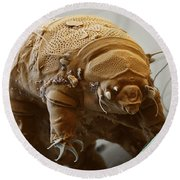 Water Bear Round Beach Towel
