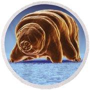 Water Bear Tardigrades Round Beach Towel