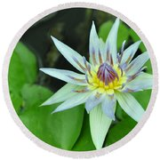 Water Lily  3 Round Beach Towel