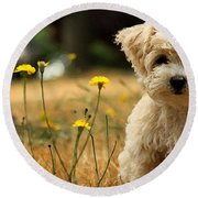West Highland White Terrier Painting Round Beach Towel