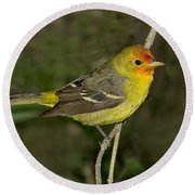 Western Tanager Round Beach Towel