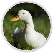 White Duck Round Beach Towel