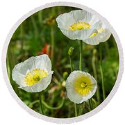 White Iceland Poppy - Beautiful Spring Poppy Flowers In Bloom. Round Beach Towel