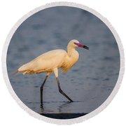 White Morph Redish Egret Round Beach Towel