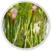 White-topped Pitcher Plant Round Beach Towel