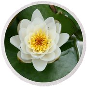 White Waterlily  Round Beach Towel