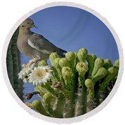 White-winged Dove Atop A Saguaro Round Beach Towel