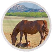Wild Horses Mother And Foal Round Beach Towel