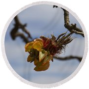 Wiliwili Flowers - Erythrina Sandwicensis - Kahikinui Maui Hawaii Round Beach Towel