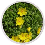 Yellow Ice Plant In Bloom Round Beach Towel