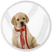 Yellow Labrador Puppy Round Beach Towel