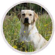 Yellow Labrador Retriever Round Beach Towel