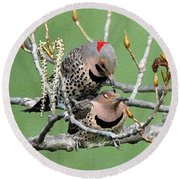 Yellow-shafted Northern Flickers Round Beach Towel