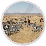Zebra Migration Maasai Mara Kenya Round Beach Towel
