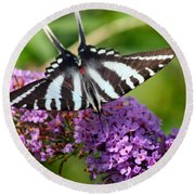 Zebra Swallowtail Butterfly At Butterfly Bush Round Beach Towel
