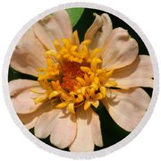 Zinnia From The Candy Mix Round Beach Towel