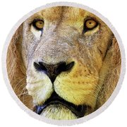 Lion Dafrique Panthera Leo Round Beach Towel
