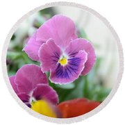 Viola Tricolor Heartsease Round Beach Towel