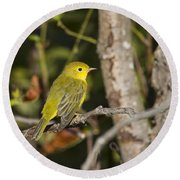 Yellow Warbler Round Beach Towel