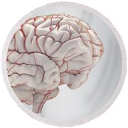 Brain With Blood Supply Round Beach Towel