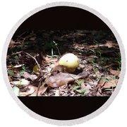 Australia - One Bush Mushroom Round Beach Towel