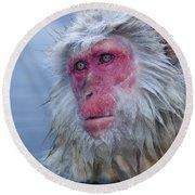Japanese Macaque Round Beach Towel