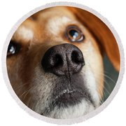 Portrait Of Red Bone Coon Mix Dog Round Beach Towel