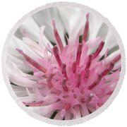 Bachelor Button From The Frosted Queen Mix Round Beach Towel