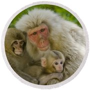 Snow Monkeys, Japan Round Beach Towel
