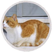 Cat In Hydra Island Round Beach Towel