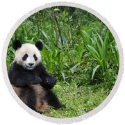 Giant Panda Round Beach Towel