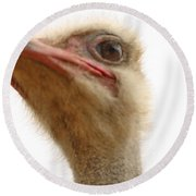 Ostrich Closeup Round Beach Towel