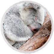 Adorable Koala Bear Taking A Nap Sleeping On A Tree Round Beach Towel
