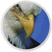 American Bald Eagle Haliaeetus Round Beach Towel