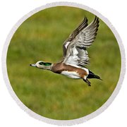 American Wigeon Drake Round Beach Towel