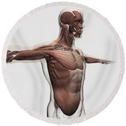 Anatomy Of Male Muscles In Upper Body Round Beach Towel