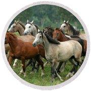 Arabian Horses Round Beach Towel