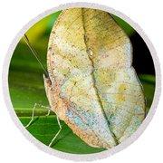 Autumn Leaf Butterfly Round Beach Towel