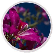 Bauhinia Purpurea - Hawaiian Orchid Tree Round Beach Towel