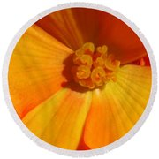 Begonia Named Nonstop Apricot Round Beach Towel