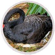 Black Swan At Nest Round Beach Towel