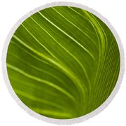 Calla Lily Stem Close Up Round Beach Towel