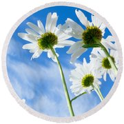 Close-up Shot Of White Daisy Flowers From Below Round Beach Towel