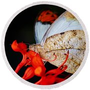 Colorful Portrait Of A Butterfly  Round Beach Towel