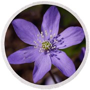 Common Hepatica Round Beach Towel