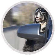 Cool Dog Round Beach Towel
