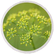 Yellow Dill Flower Round Beach Towel